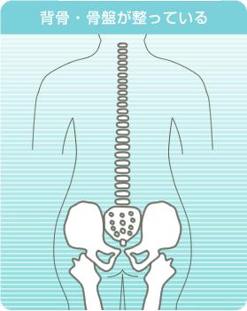 背骨・骨盤が整っているイラスト